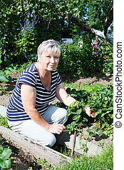 Senior adult woman showing red strawberries cultivated on garden