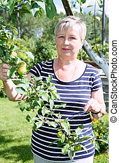 Senior adult female standing near apple-tree with green apples brunch