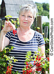 Senior woman in own garden showing brunch of red currants berries