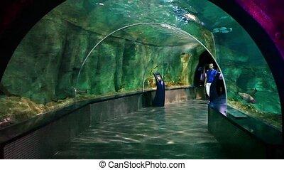 aquarium - young boys walking at aquarium