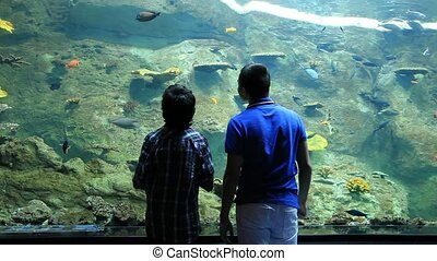 aquarium - young boys watch aquarium