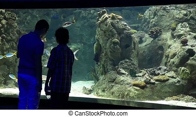 aquarium - young boys watch aquarium, steady cam shoot