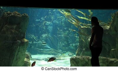 aquarium - man watch beautiful aquarium