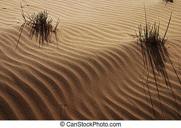 Desert - Waste land and grass