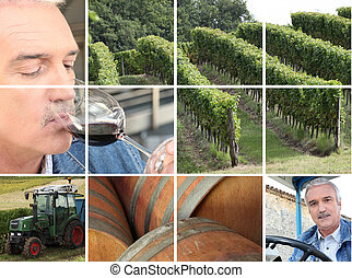 Montage of wine production