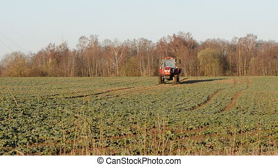 tractor on spring rapes field