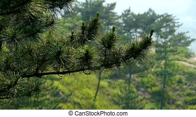 pine trees,bushes in the wind,Dense