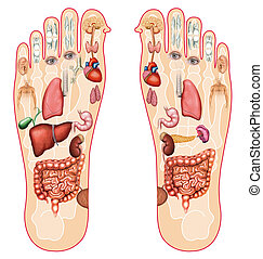 Reflexology  - alternative medicine of the human body