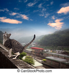 Cat with nice sky - Taiwan's Hou tunnel in my mind is a good...