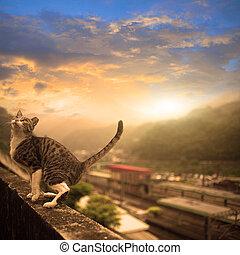 gato, agradable, cielo