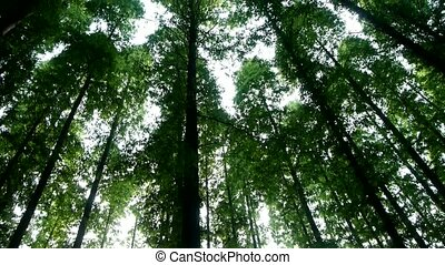 Panoramic of trees crown,forest,jungle,shade shadow