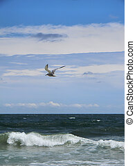Seagull Flying Over Ocean - Seagull flying over the ocean on...