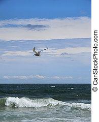 Seagull Flying Over Ocean - Seagull flying over the ocean on...