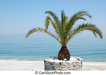 The beach with palm tree, Halkidiki, Greece