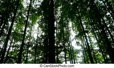 Panoramic of trees crown,forest,jungle,shade shadow.
