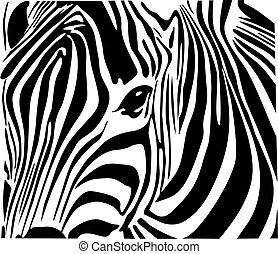 Zebra  - Illustration of beautiful zebra isolated on white