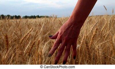 Woman walks across the field