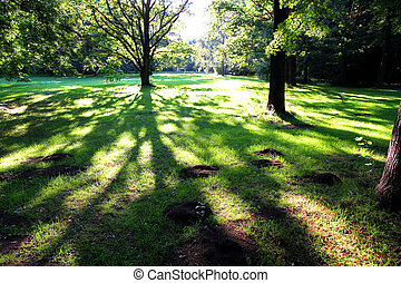 Sunset in the Woods - Trees casting large shadows in the...