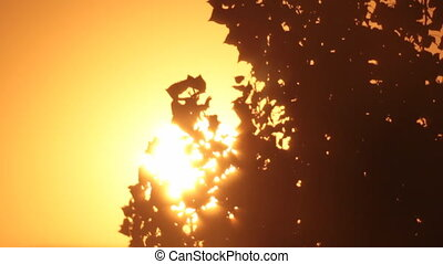 Tree leaves silhouettes swinging in sun rays