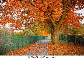紅色, 秋天, 橡木, 樹