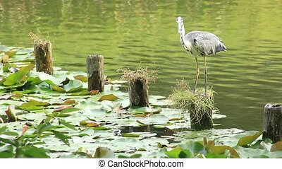 heron - This bird is a heron