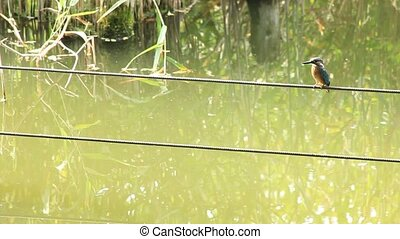 kingfisher - This is a kingfisher.