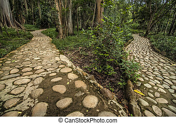 Diverging Paths - An image of two diverging paths in a...
