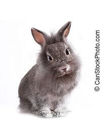 joven, adorable, poco, conejito, conejo