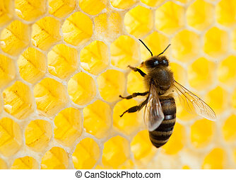 bee in honeycomb close-up shot - bee in honeycomb close-up...
