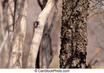 Bushveld Tree Trunks - Picture of Different Bushveld Tree...