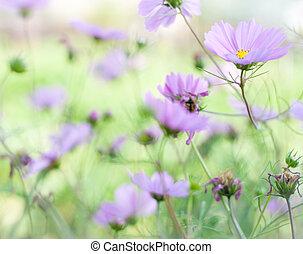 Soft color flower background