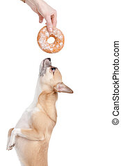 Dog wants donat - Dog is eager to eat donat, isolated on...