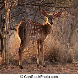 Young Female Njala with Winter Sunset Sun in Hair - Young...