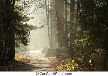 Trail in autumn forest at dawn