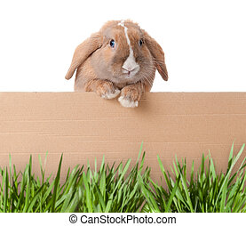 little bunny with cardboard - Cute and beautiful rabbit...