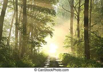 Spring forest on a misty morning - Dirt road in a fresh...