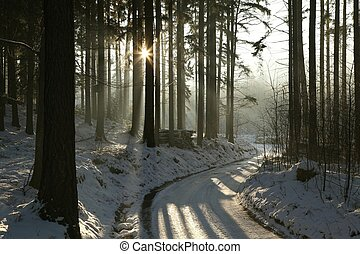 Path in winter coniferous forest - Path leading through the...