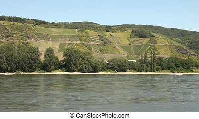 Winegrowing near a river Rhine - Winegrowing near a river...
