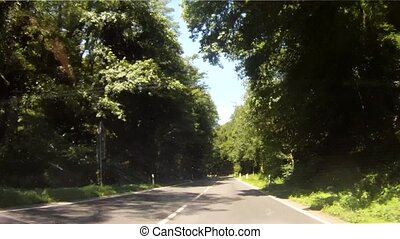 Forest Driving