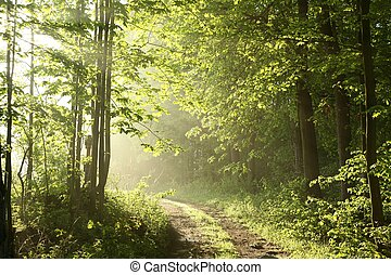 Spring forest on a sunny morning