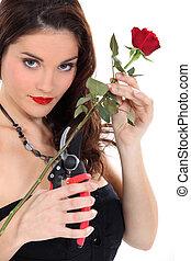 Woman pruning red rose
