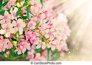 Pink flower's branch - Oleander Nerium - Pink flower's...