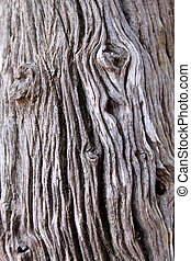 árvore, tronco, fundo