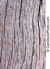 Tree Trunk Background - Rough Grooved Bushveld Tree Trunk...