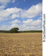 august stubble field - rural landscape with a cultivated...