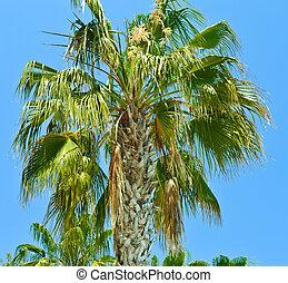 isla,  -, Palma, árboles, paraíso
