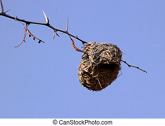 Weaver Bird Nest - Resourceful Weaved Grass Weaver Bird Nest...
