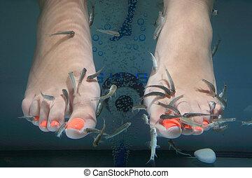 fish spa - close-up of feet taking care at fish spa
