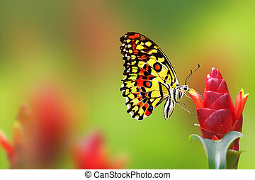 Monarch Butterfly on green red background