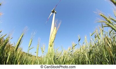 wind generator and rye